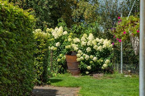 Welche Pflanzen Als Sichtschutz Garten by Str 228 Ucher Als Sichtschutz 187 Diese Geh 246 Lze Eignen Sich
