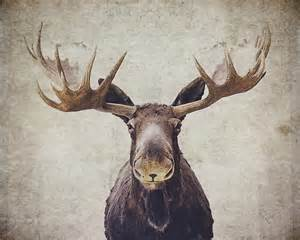 moose gifts amp merchandise redbubble