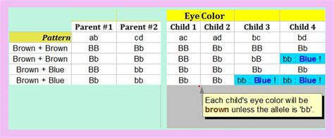 Baby Hair Type Predictor by Baby Eye Color Prediction Chart Models Picture