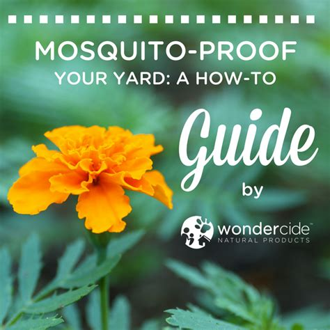 mosquito proof backyard mosquito proof your yard a how to guide 171 wondercide blog