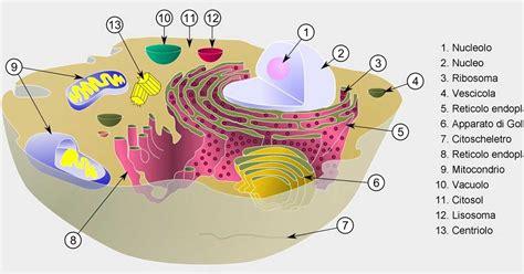potere calorico degli alimenti ricchi in salute la frequenza vibrazionale degli alimenti