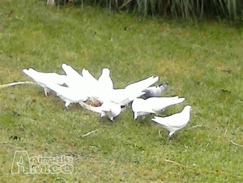 vendita animali da cortile vendita animali da cortile vendita gallina a roma