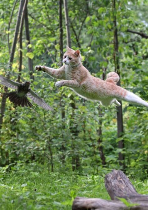 cat jumping after bird funny pictures of animals