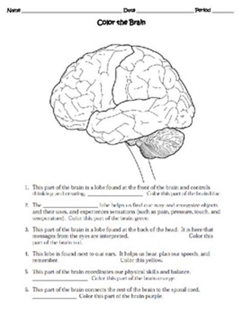 The Nervous System Worksheet by All Worksheets 187 Grade 5 Science Worksheets Human