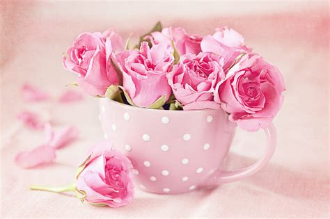 descargar fondos de pantalla flores de muchos colores hd fondos de pantalla 5200x3466 rosas rosa color taza grande