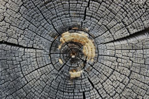 nature growth pattern 17 best images about natural mandalas on pinterest