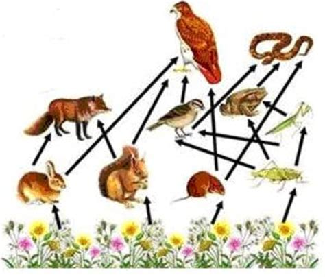 prueba de cadenas y tramas alimentarias biolog 205 a cadenas y tramas alimentarias