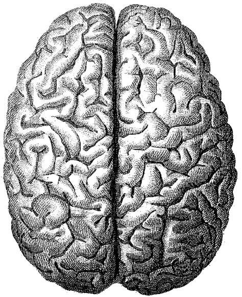 White Brain mmmm braaaaaiiiiiiinnn black white brain drawing for