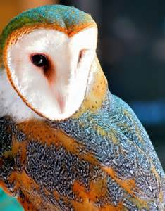 owl colors best 25 beautiful owl ideas on owls owl