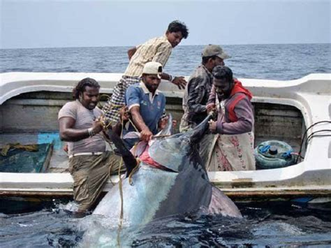boating license la big tuna little boat the hull truth boating and