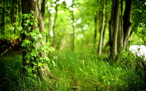 Nature Hd Wallpapers 1080p Widescreen by Nature Hd Wallpapers 1080p Widescreen Wallpapersafari