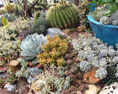 succulent designs cactus and succulent garden design