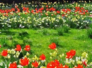 Flowers In A Garden Enjoy Growing An Actual Flower Garden In Your Home