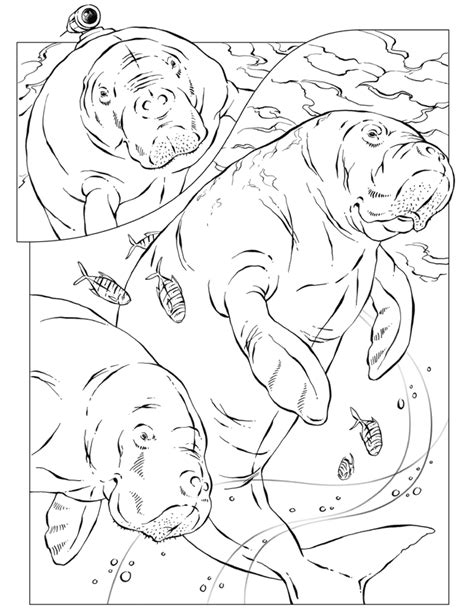 National Geographic Colouring Pages Coloring Home National Geographic Coloring Pages