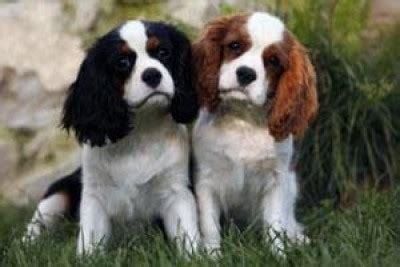 canile pavia cuccioli regalo animali se volete regalare un cucciolo andate al parco