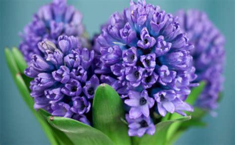 fiori da giardino primaverili fiori primaverili vaso leitv