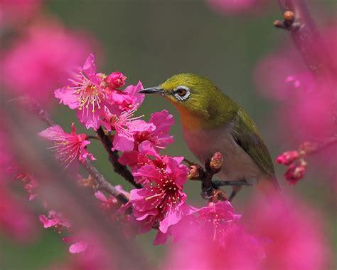 wallpaper flower bird flowers and birds wallpaper wallpapersafari