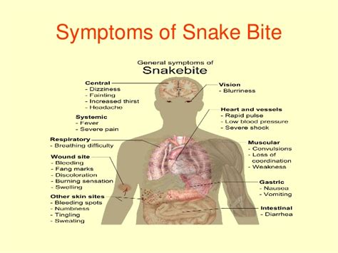 snake bite symptoms snake bite rabies scorpion bite ppt presented by prof dr r r deshpa