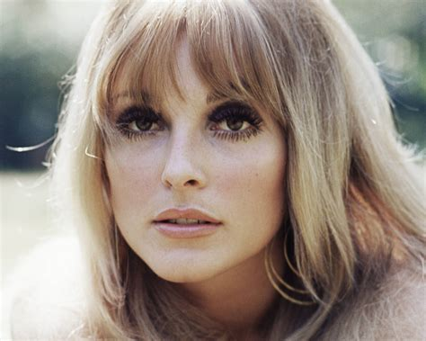 sharon tate today in history actress sharon tate found murdered aol