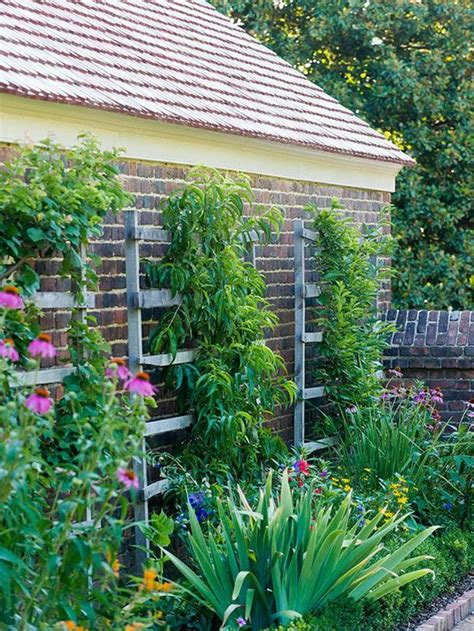 Thin Trellis Trellis Wooden Trellis And Narrow Garden On