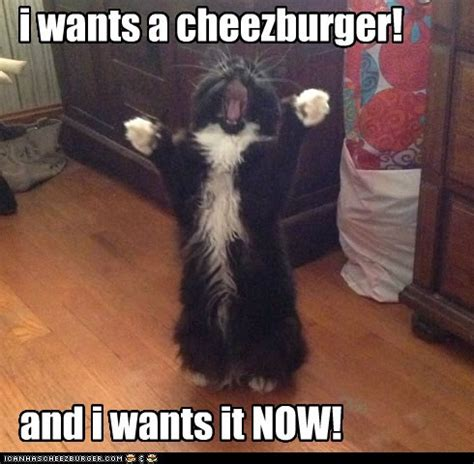 Cheezburger Meme - i can has cheezburger page 4 lolcats n funny pictures