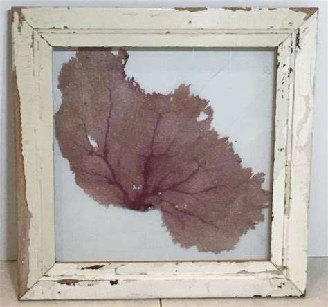 sea fan shadow box large natural sea shell fan in shadow box for sale at 1stdibs