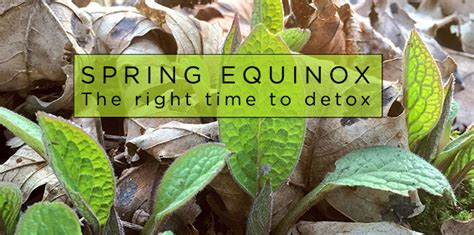 Equinox Detox by Equinox Detox The Equitox