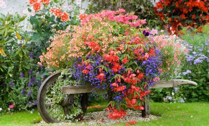 How Harold Learned To Love And Live With The Bottle Country Garden Flowers