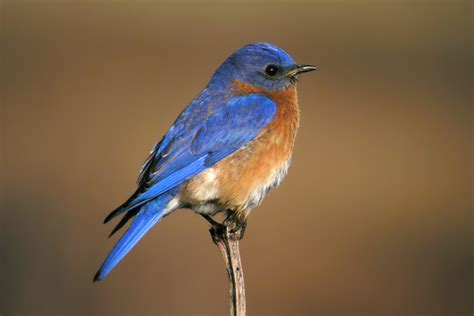 migratory birds of wisconsin slideshow the nature