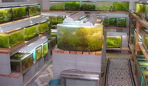 Fish Room Build by 11 Great Fishrooms To Inspire You