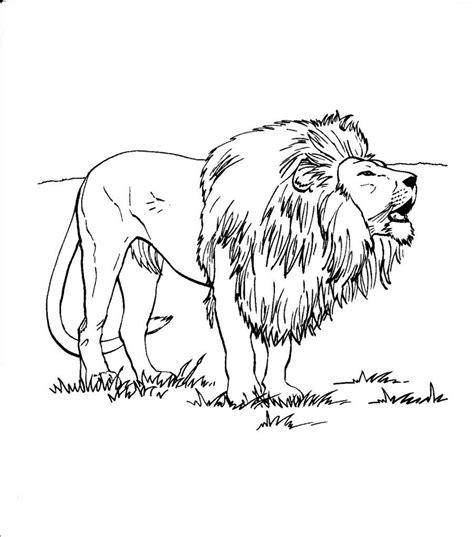 imagenes leones para pintar dibujos para pintar de leones dibujos para colorear de leones
