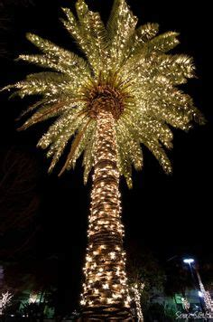 images of palm trees decorated for christmas 1000 images about tacky tourist ideas on