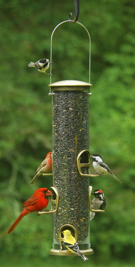 the birdman feeder types