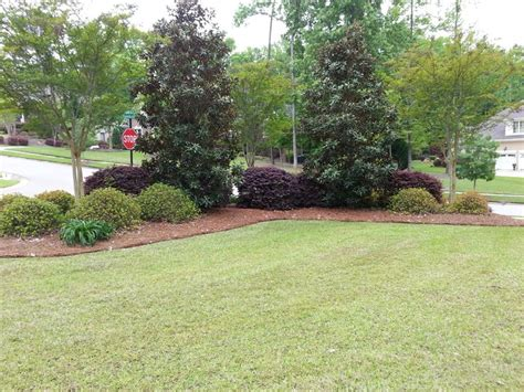 tree lot ideas 1000 images about corner lot landscaping ideas on