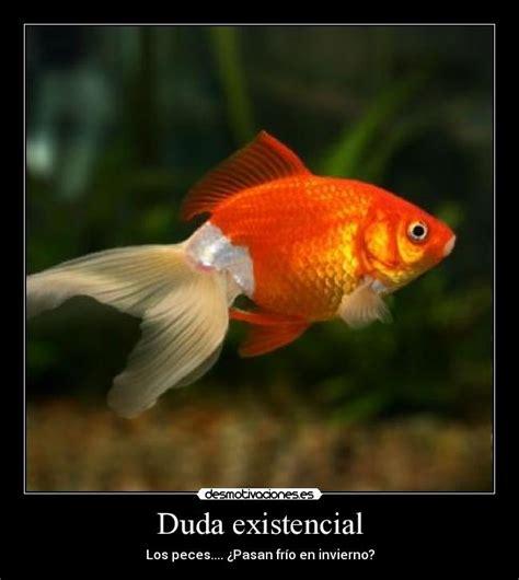 duda existencial desmotivaciones - Dudas Existenciales Filosofia