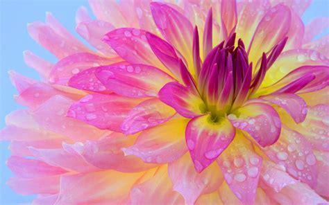 Pink Flower ? WeNeedFun