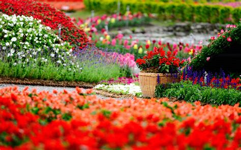 Colorful Flower Gardens Flowers Garden Summer Sping Nature Colorful Field Hd Wallpapers Wallpapers