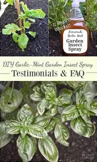 Garden Answer Oregon Diy Garlic Mint Garden Insect Spray Testimonials Faqs