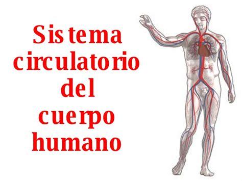 imagenes de los nombres del cuerpo humano en ingles sistema circulatorio del cuerpo humano
