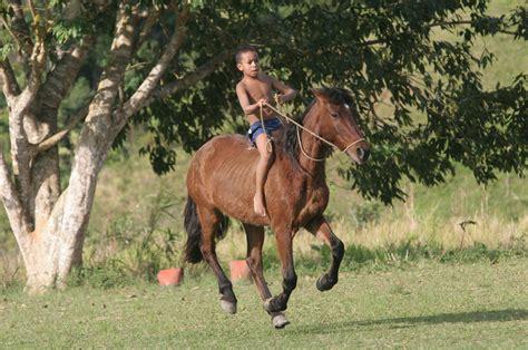 caballo y muchacho el 0060884258 agrega previsualizador ni 241 o montando a caballo quilombo sao paulo brasil