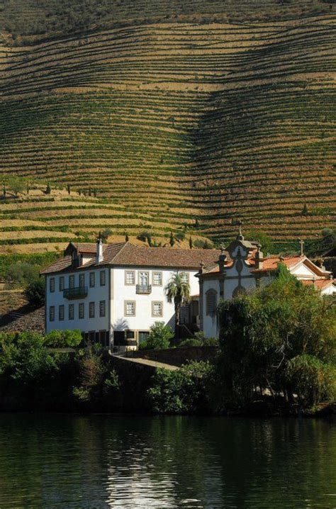 port the douro guides to wines and top vineyards books 25 best ideas about port wine on wine
