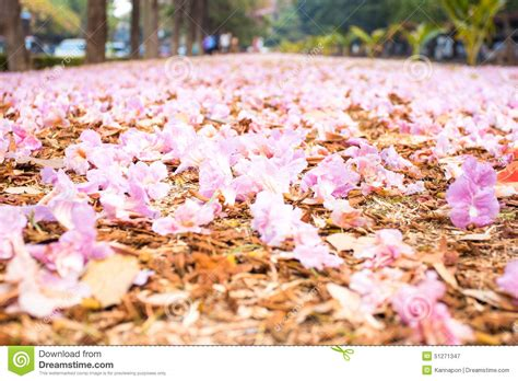 Romantic Way Of Pink Flower On The Floor Stock Photo