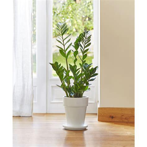 Plante Fleurie D Intérieur Facile D Entretien by Plante D Interieur Facile Conceptions De La Maison