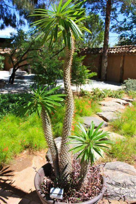 Traveling To Tucson Botanical Gardens Paperblog Tucson Botanical Gardens Butterfly Exhibit