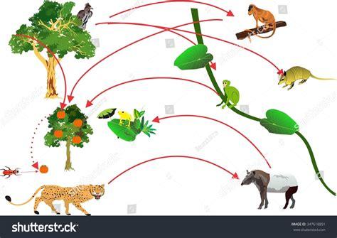 monkey food chain diagram rainforest food chain crcle stock vector