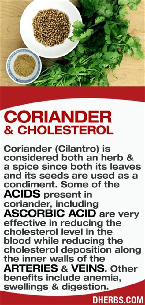 Cilantro Detox Side Effects by Dherbs Ht Coriander Jpg 374 215 785 Pixels Tea And Herbs