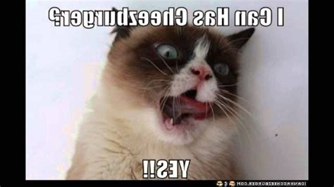 Grumpy Cat Meme Clean - grumpy cat meme clean cat best of the funny meme