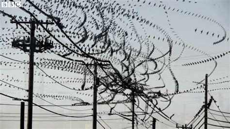 flight pattern video bird flight patterns images
