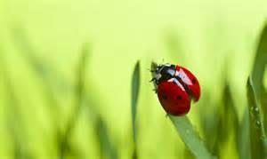 insectes auxiliaires du jardin comment attirer les