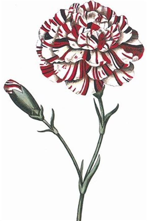 vanit dizionario il linguaggio segreto dei fiori